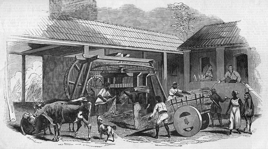 Brazilian Sugar Mill Photograph by Hulton Archive