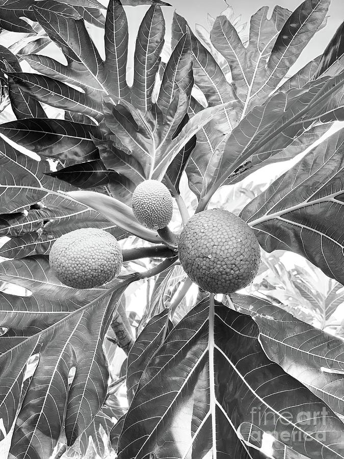 Breadfruit Mono by Laura Forde