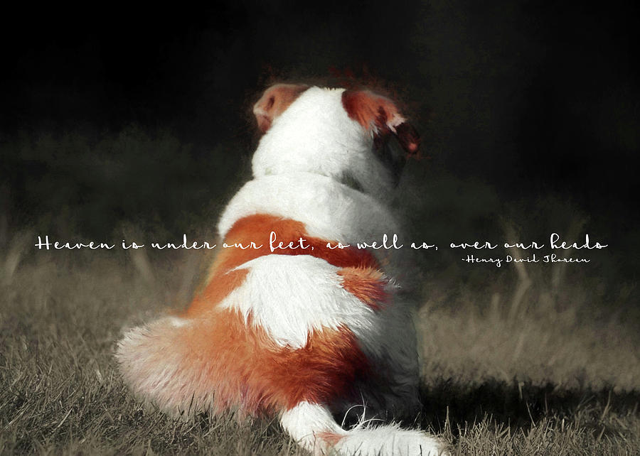 Dog Photograph - Breaktime Quote by JAMART Photography
