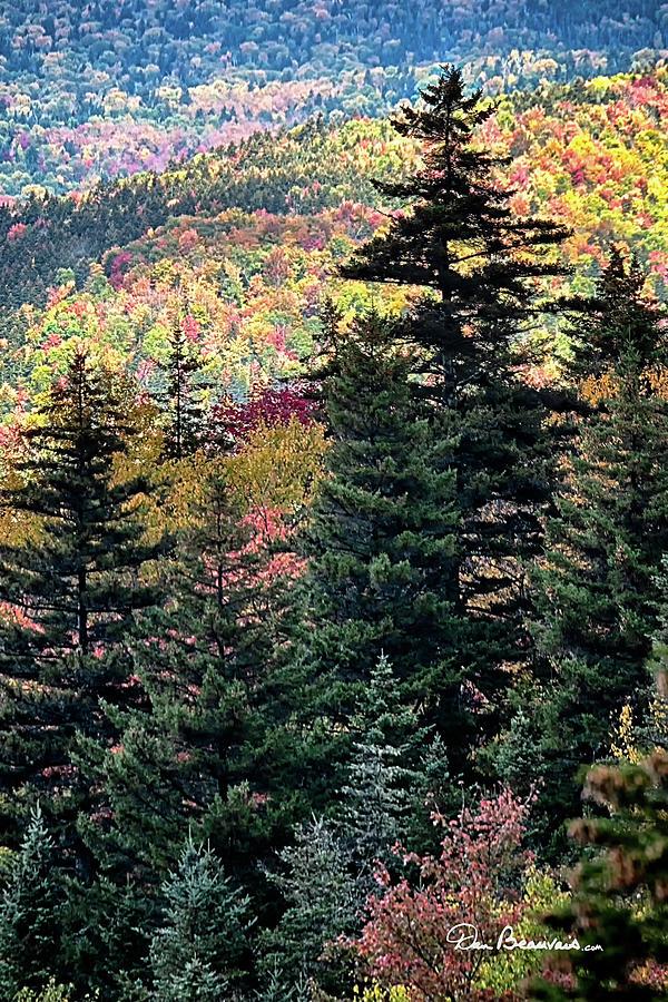 Bretton Woods 8558 Photograph