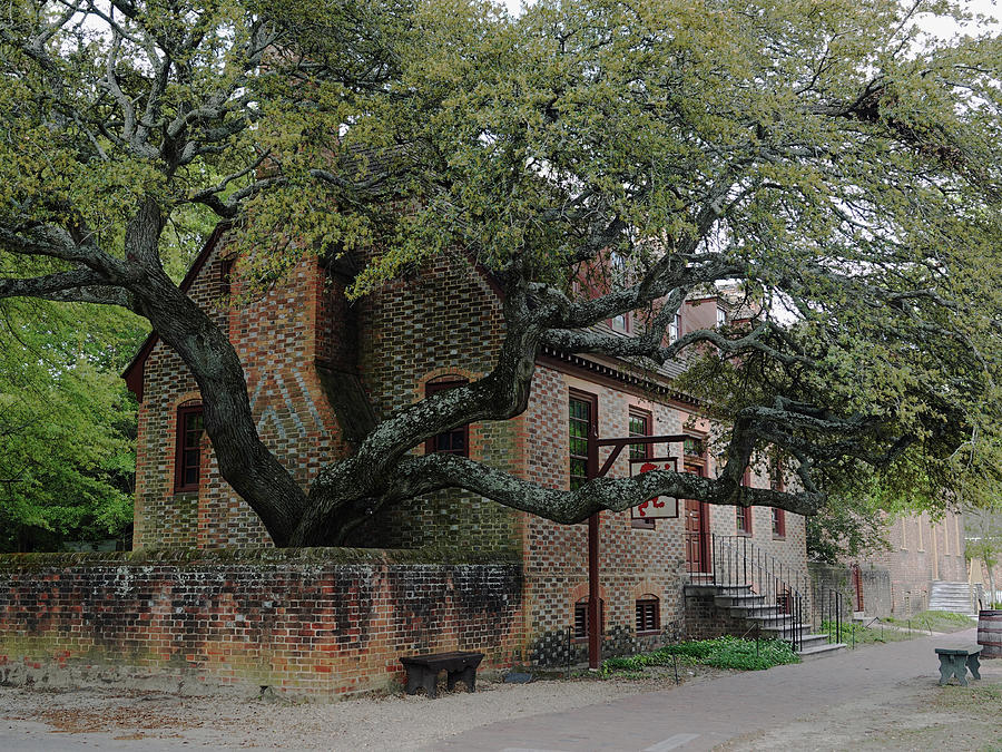 Brick house with tree by CARL SHEFFER