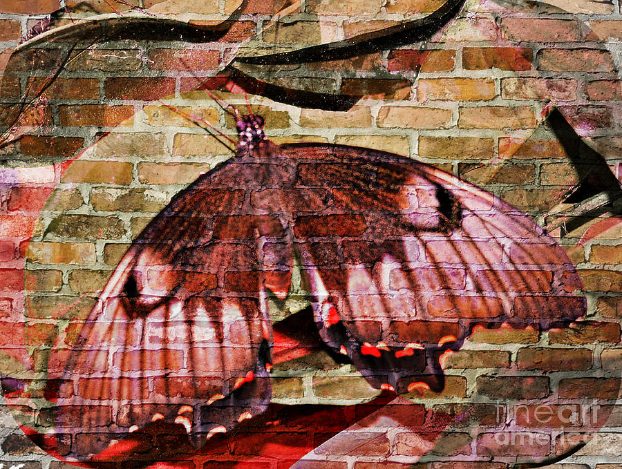 Butterfly Mixed Media - Brick In The Wall by Sabine ShintaraRose