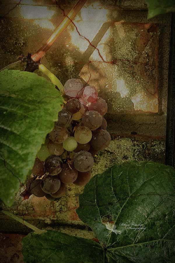 Brick Wall Grapes by Denise Winship