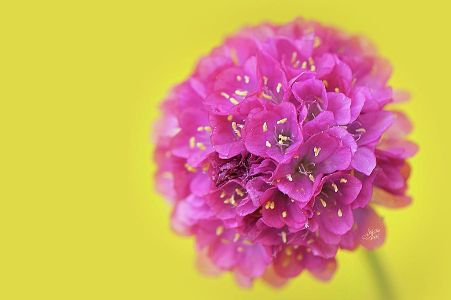Bridesmaid Blossom by Lisa Knechtel