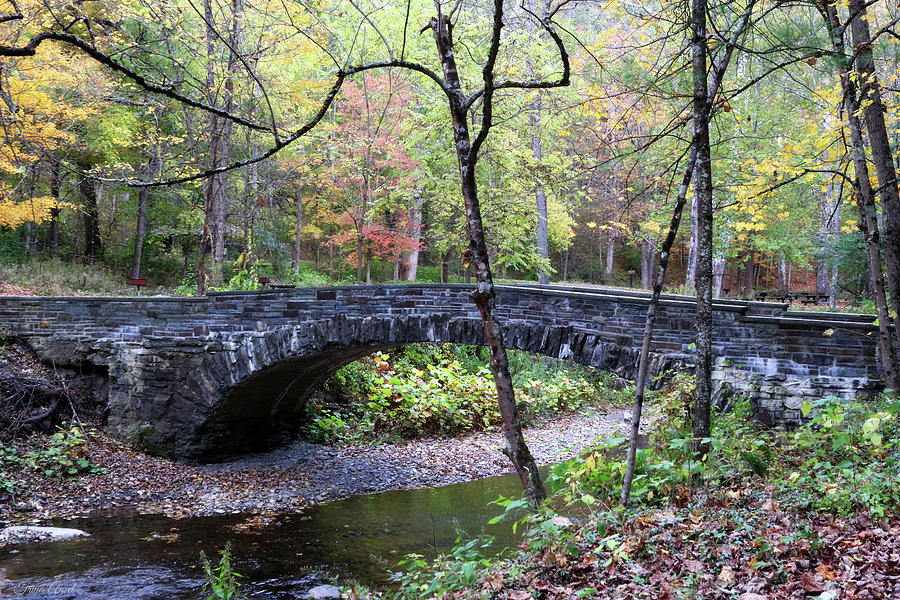 Bridge in Robert Treman State Park by Trina Ansel
