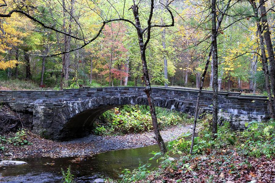 Bridge in Robert Treman State Park by Trina Ansel
