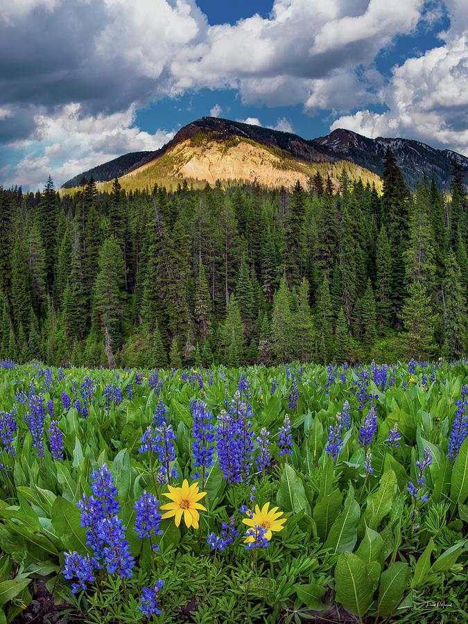 Bridger Teton National Forest Photograph by Leland D Howard