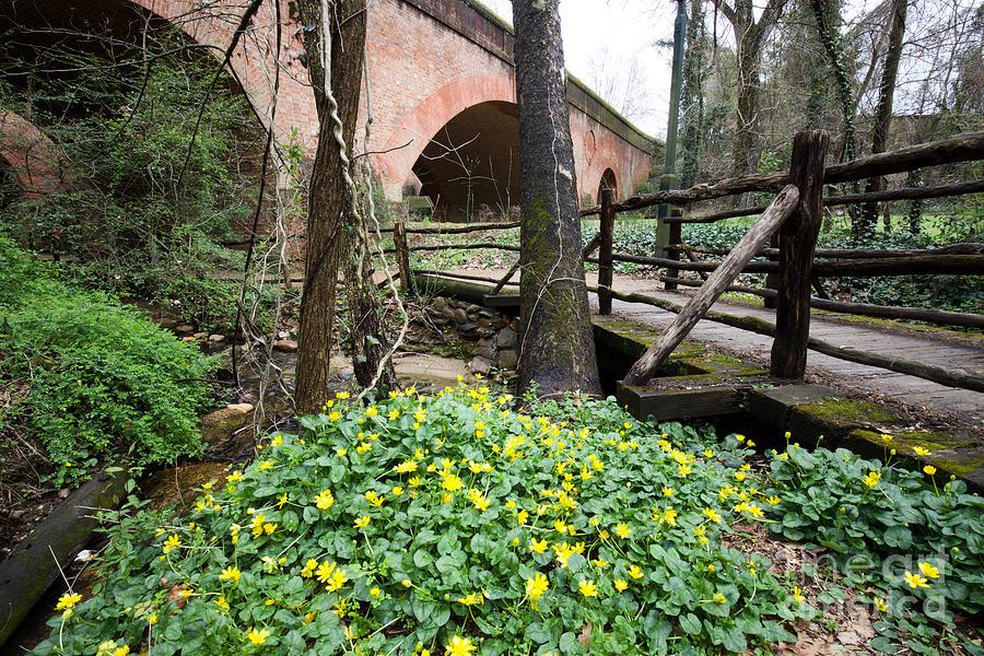 Bridges and Flowers by Rachel Morrison