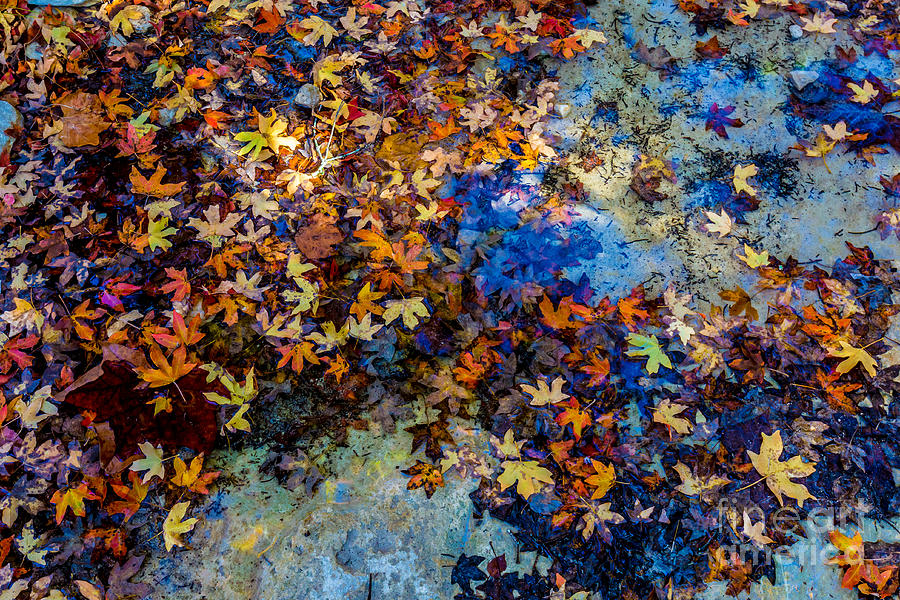 Country Photograph - Bright Beautiful Fall Foliage Floating by Richard A Mcmillin