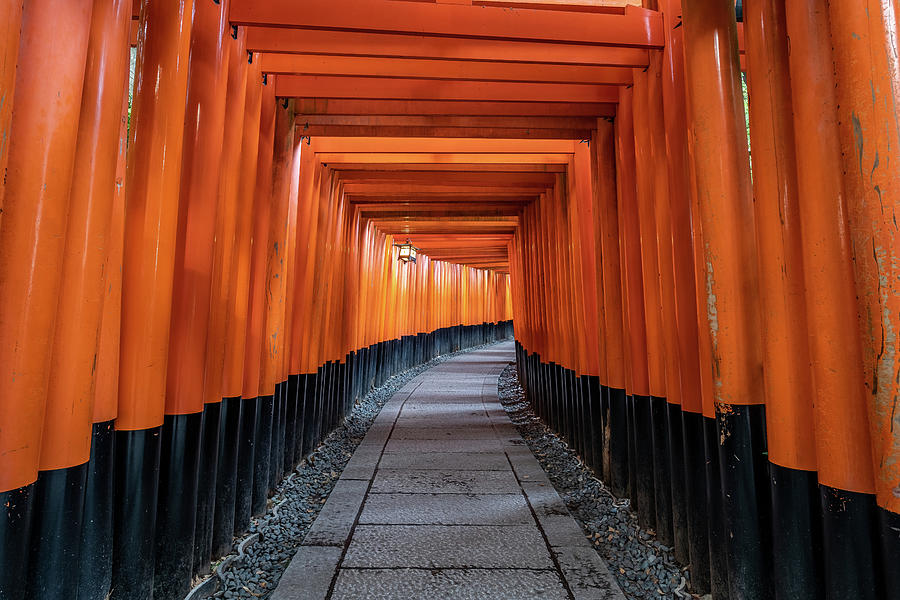 Japan Photograph - Bright Orange Torii Gates In Kyoto, Japan by Ian Robert Knight