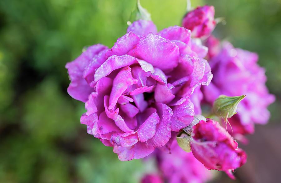 Bright Purple Flower At Lake Tahoe by Doug Ash