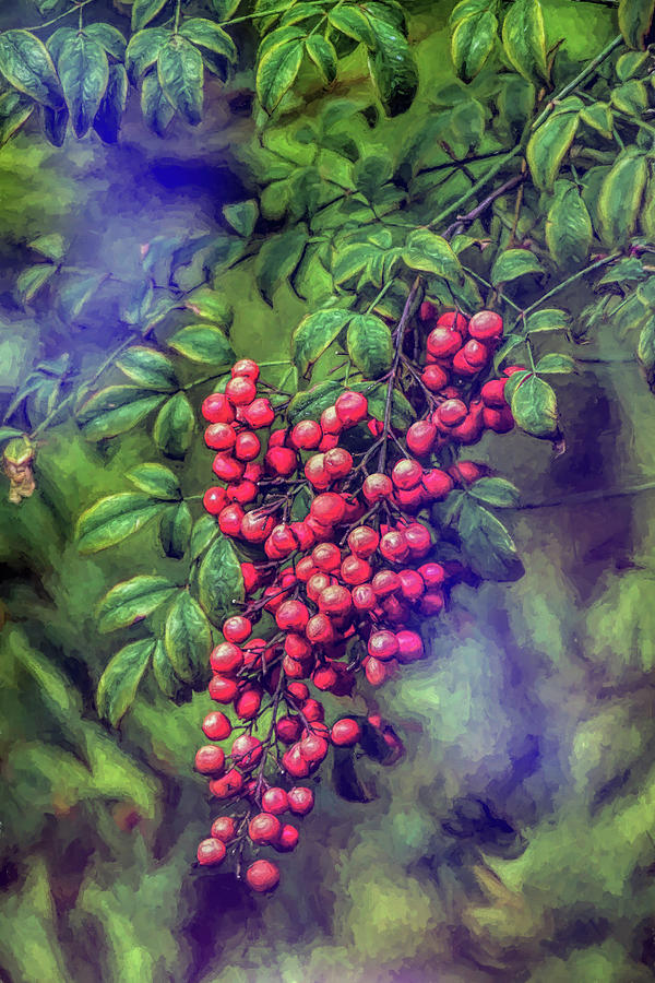 Bright Red Nandina Berries on Green Leaves Abstract Impression 3  by Linda Brody