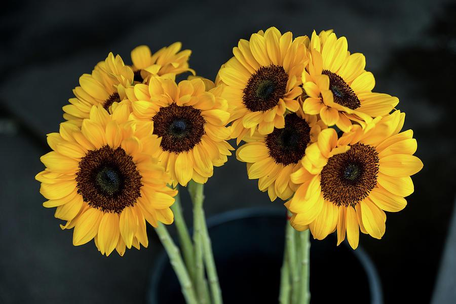 Bright Yellow Sunflowers by Ian Robert Knight