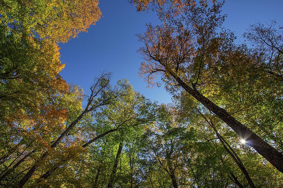 Brighten Your Day - Minden - Ontario, Canada by Spencer Bush