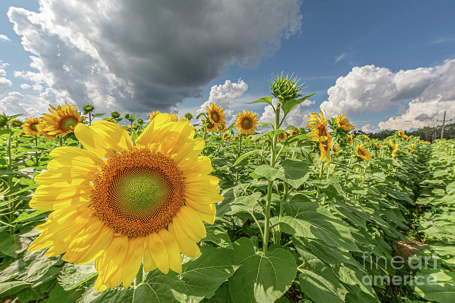 Brightest in its Field by Jackie Johnson