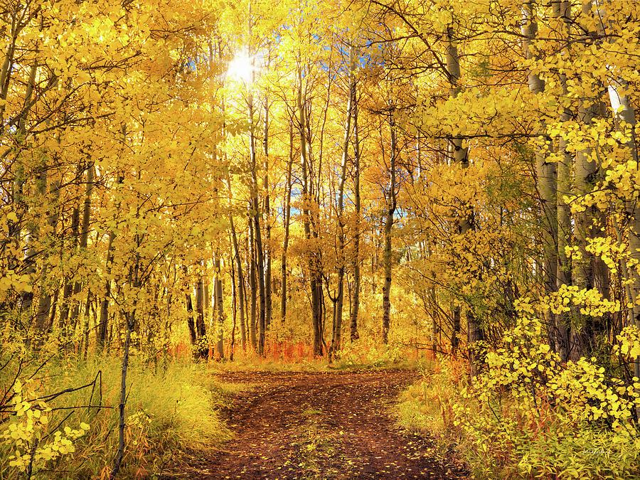 Brilliant Aspen Autumn Glow by Leland D Howard