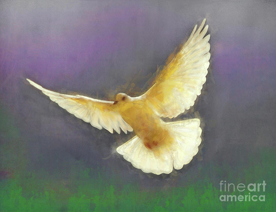 Dove Mixed Media - Bringer Of Peace by Helen White