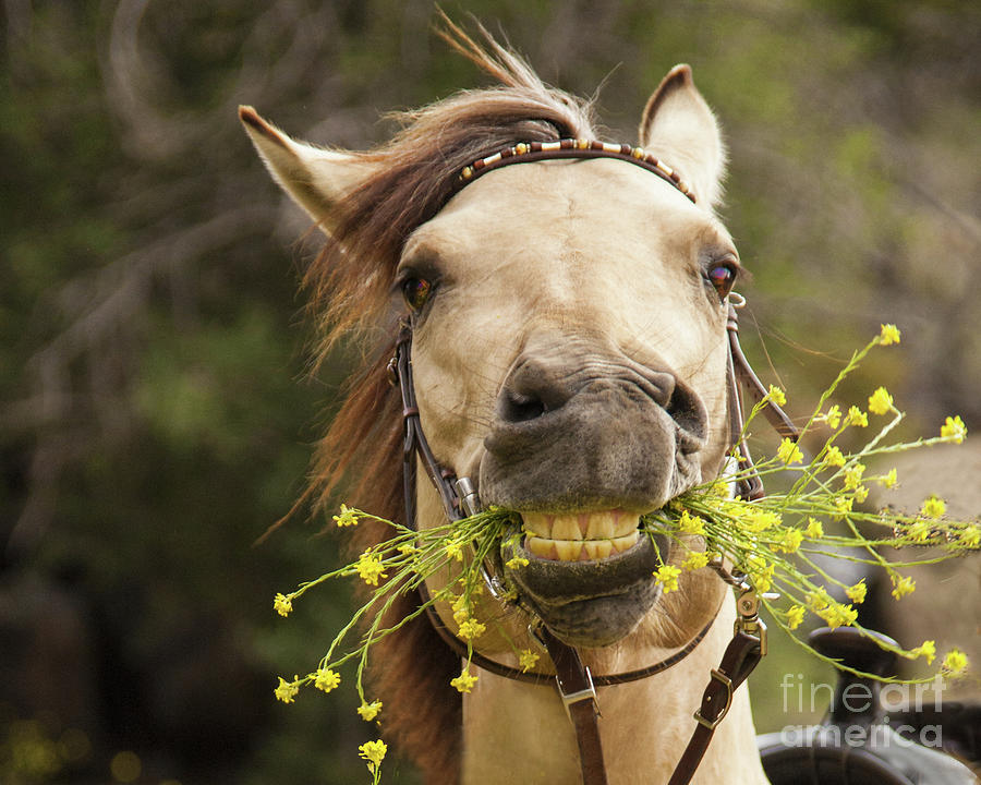 Bringing You Flowers by Jerry Cowart