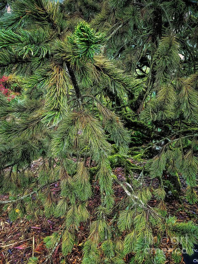 Bristlecone Pine by Jon Burch Photography