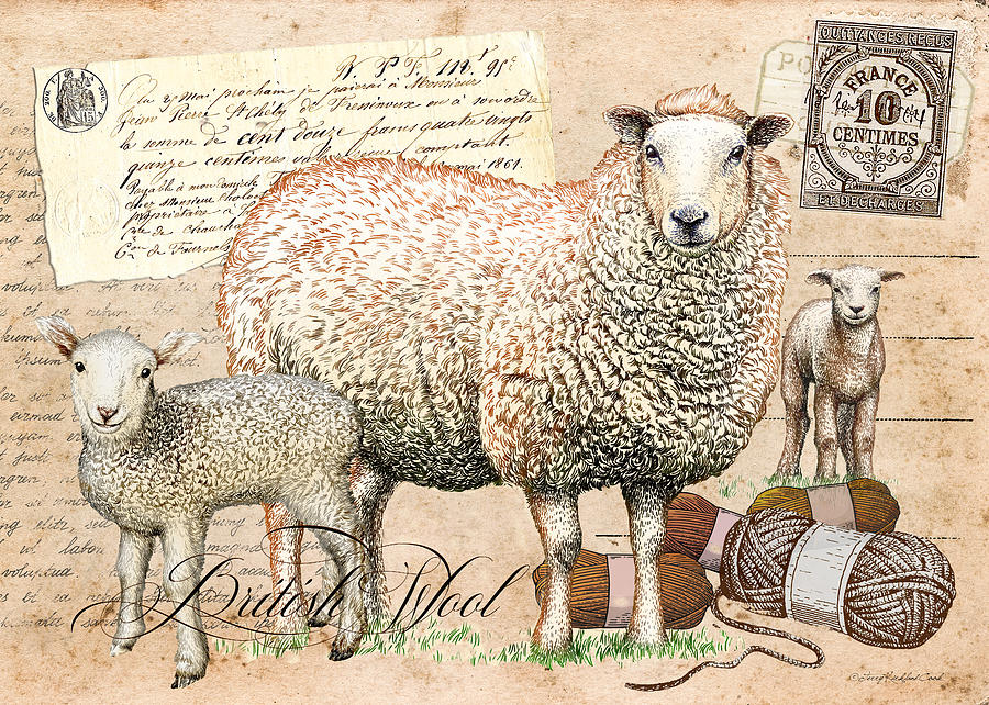 British Wool by Terry Kirkland Cook