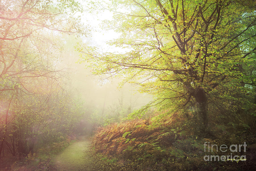 Forest Photograph - Broceliand path by Dominique Guillaume