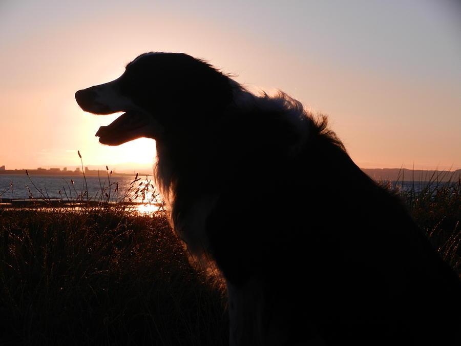 Nikon Photograph - Brodie In The Sun by Nik Watt