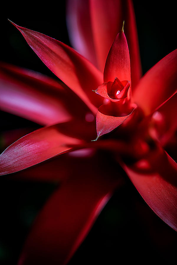 Bromeliad by Fred J Lord