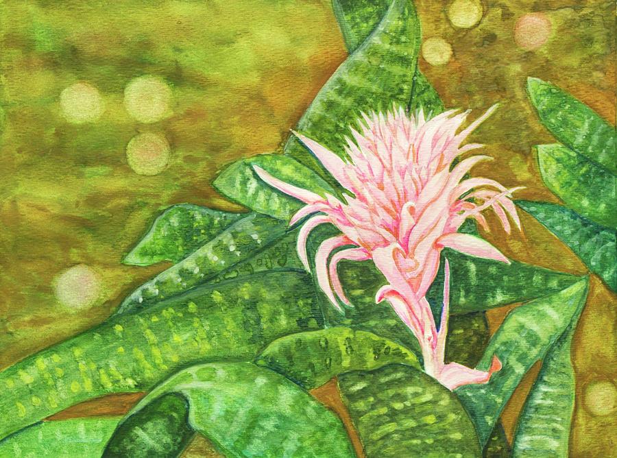 Bromeliadf by Dorothy Riley