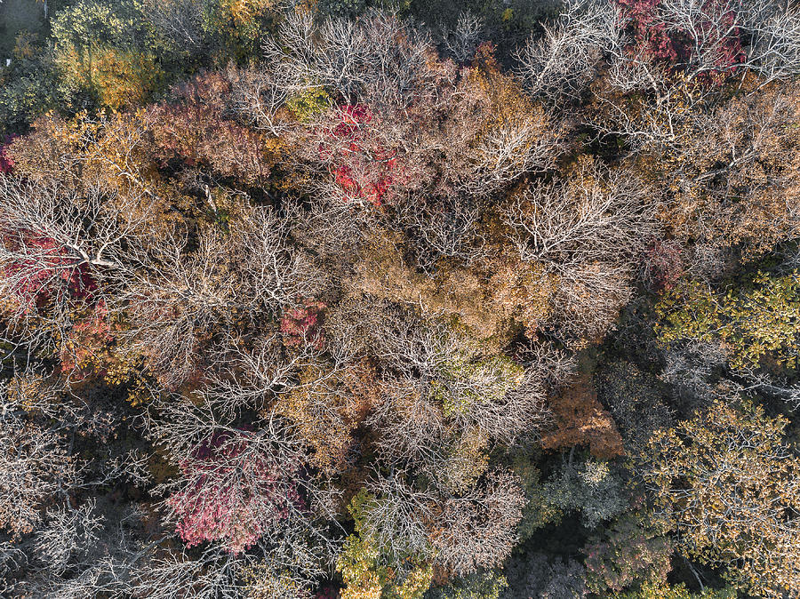 Brown Autumn Forest. Photograph