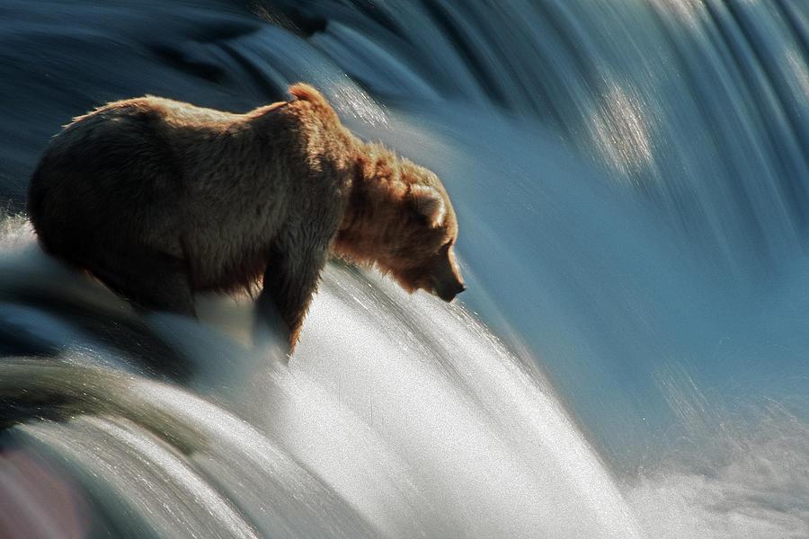 Brown Bear At Brooks Falls Photograph by Mark Newman