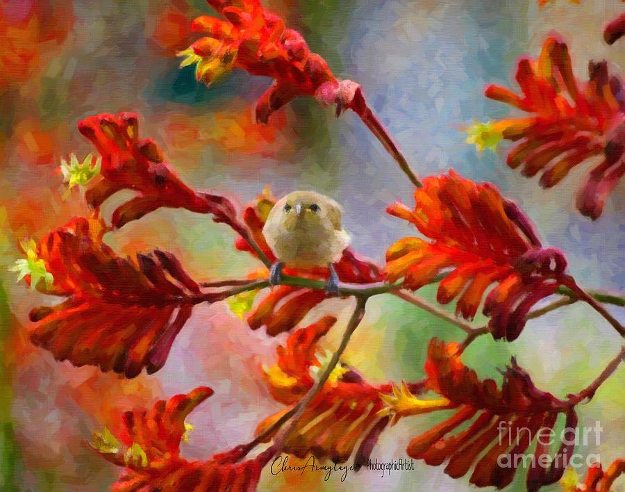 Brown Finch on an Orange Kangaroo Paw by Chris Armytage