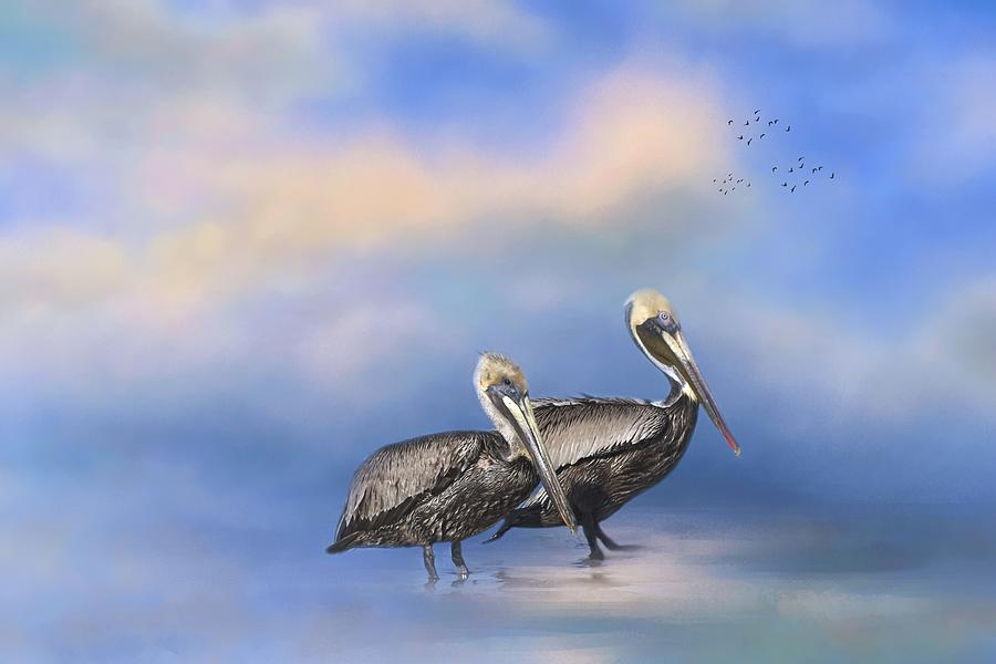 Brown Pelicans at the Shore by Kim Hojnacki