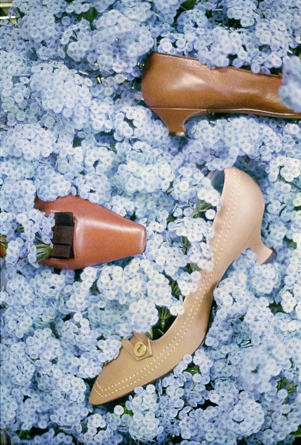 Brown Shoes In Bed Of Blue Flowers Photograph by Gordon Parks