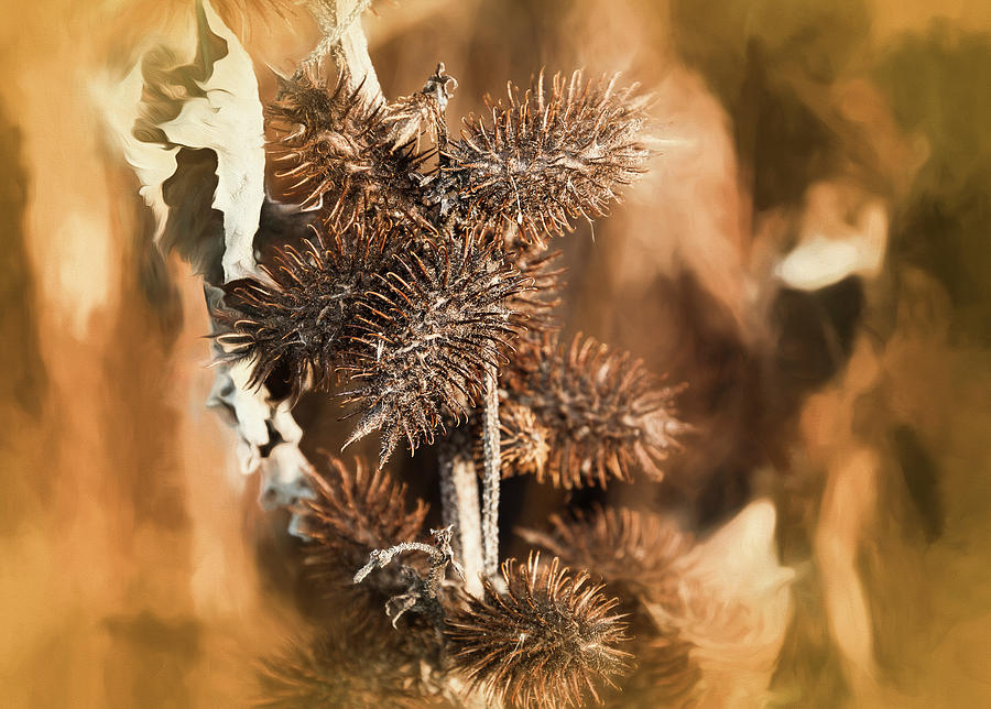 Color Photograph - Brown Thistle An Leaf Soft Yellow Pastel by Anthony Paladino