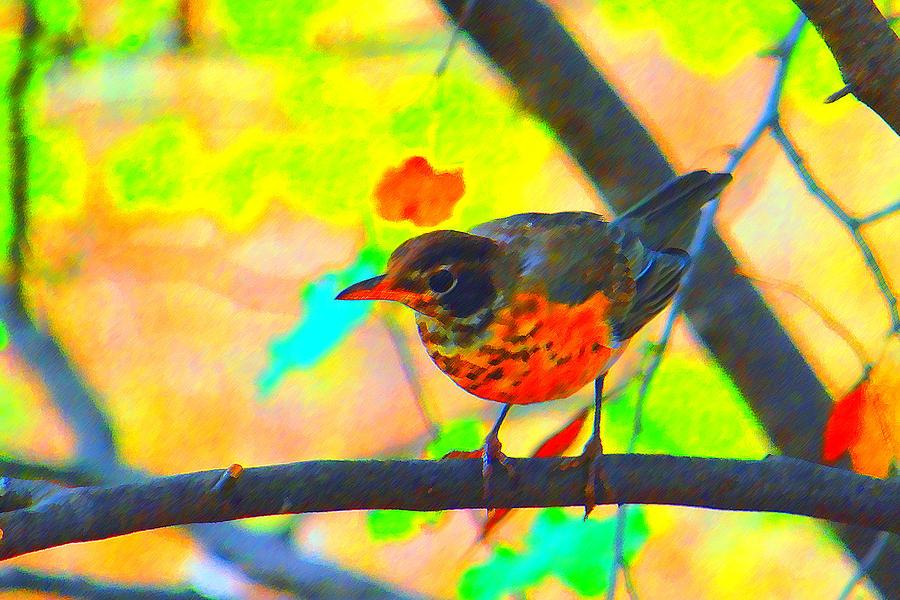 Robin Photograph - Brushed Robin by Edward Swearingen
