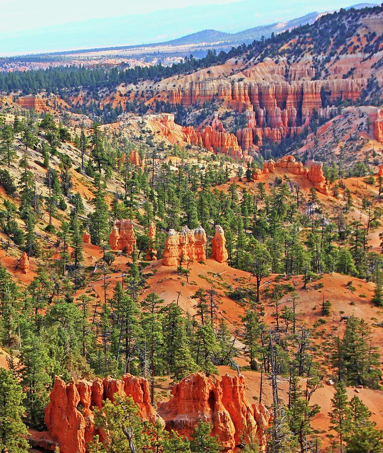 Bryce Canyon Hoodoos mountain range trees vista greens red rocks 6524 by David Frederick