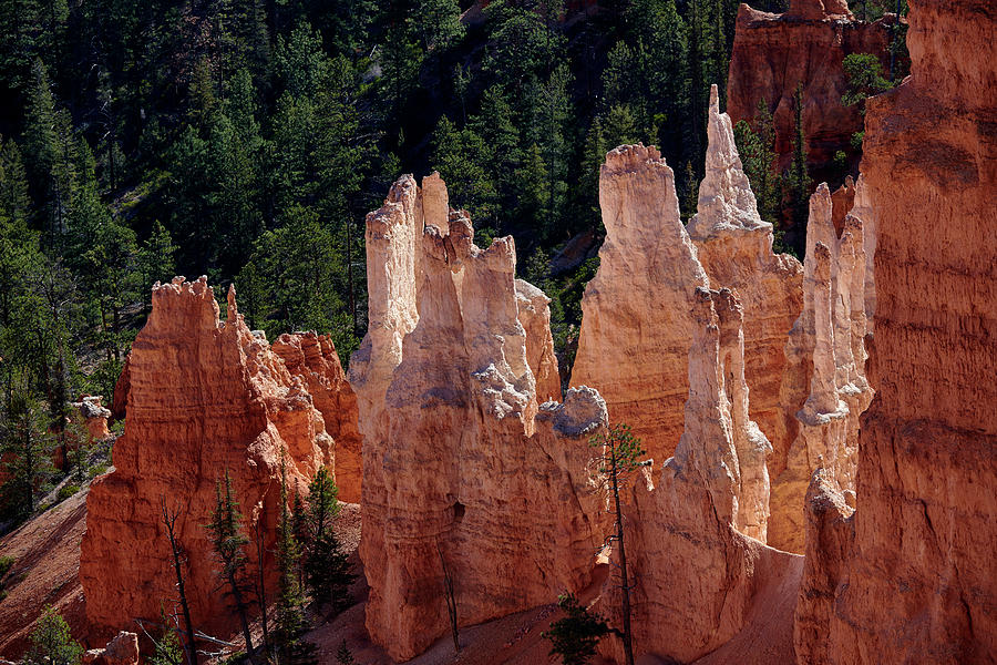 Bryce Canyon National Park Photograph - Bryce Canyon by Paul Freidlund