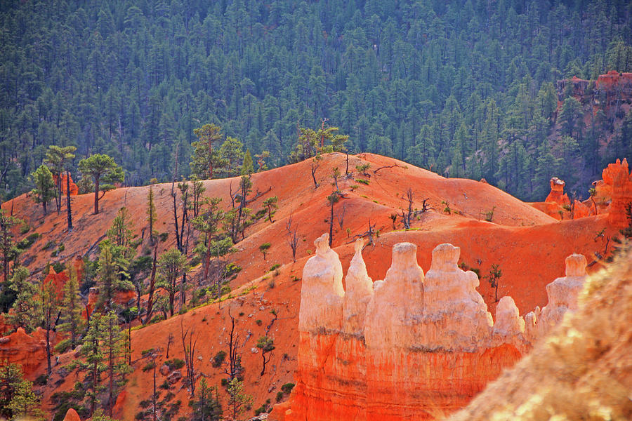 Bryce Canyon red rock hoodoos trees mountains 6559 Photograph by David Frederick
