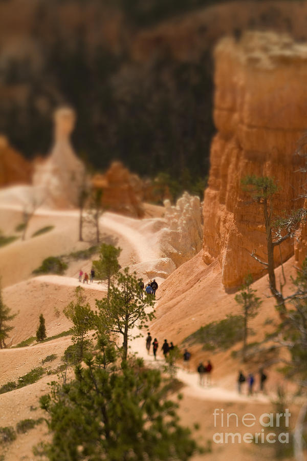 Southwest Photograph - Bryce Canyon Tilt-shift by Jenna Dosch