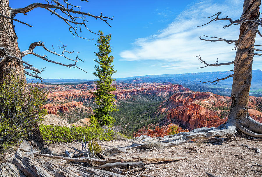 Bryce Point Beauty by Joseph S Giacalone
