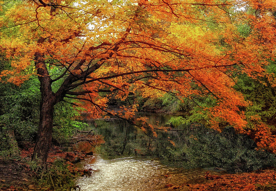 Autumn Photograph - October Maple by Jessica Jenney