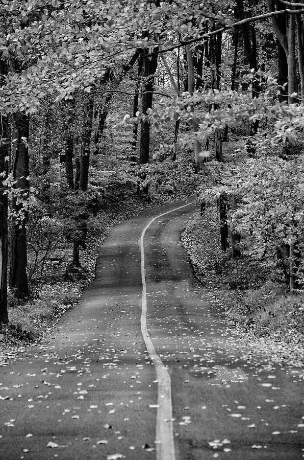 Bucks Photograph - Bucks County Road In Black And White by Bill Cannon