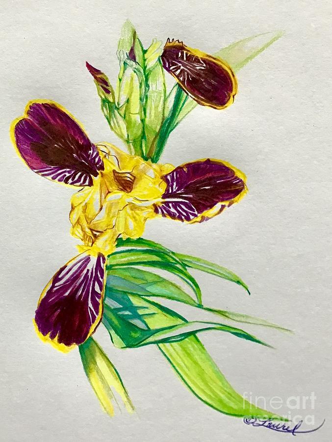 BUDs Bumblebee Iris by Laurel Adams
