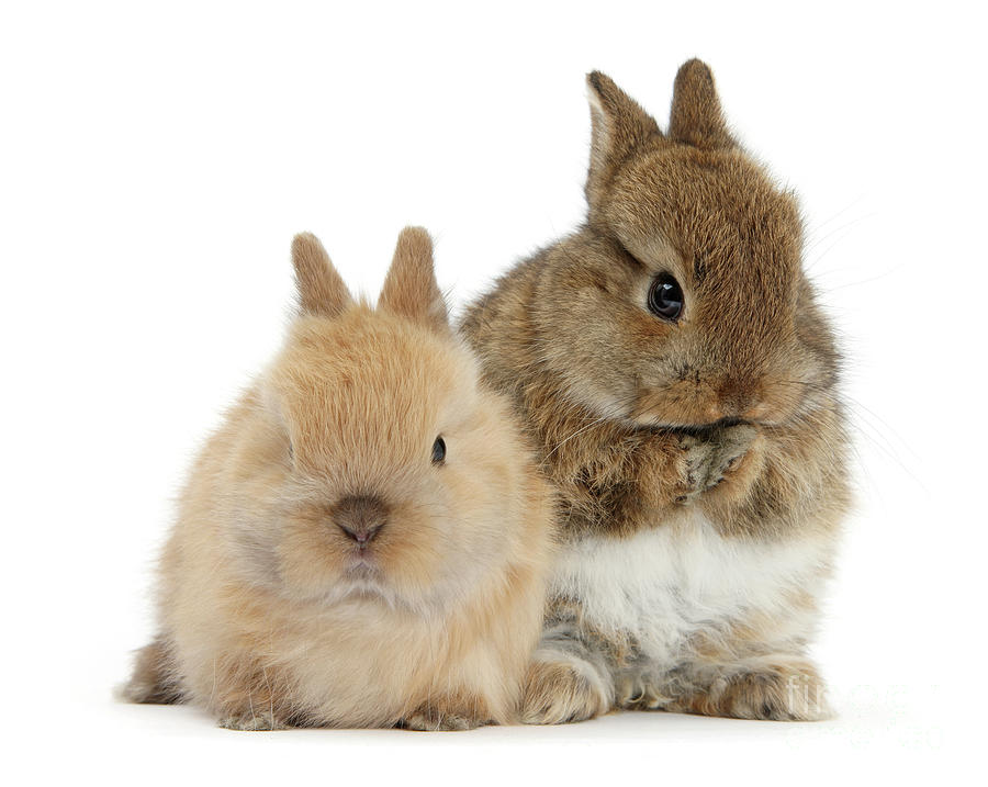 Buff Love Bunnies by Warren Photographic