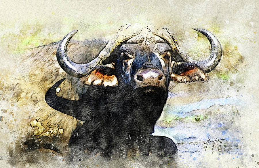 buffalo 1a by Mauro Celotti