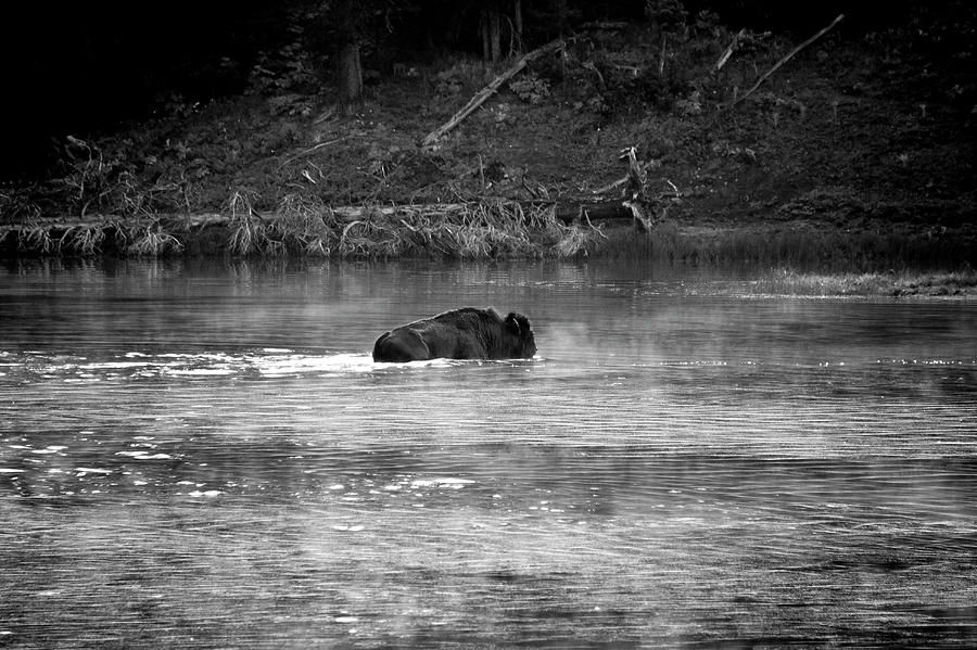 Buffalo Crossing by Michael Monahan