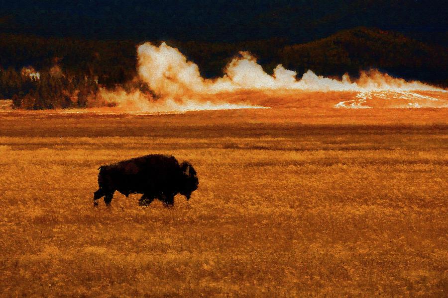 Buffalo Fire Sunset by Patricia Montgomery
