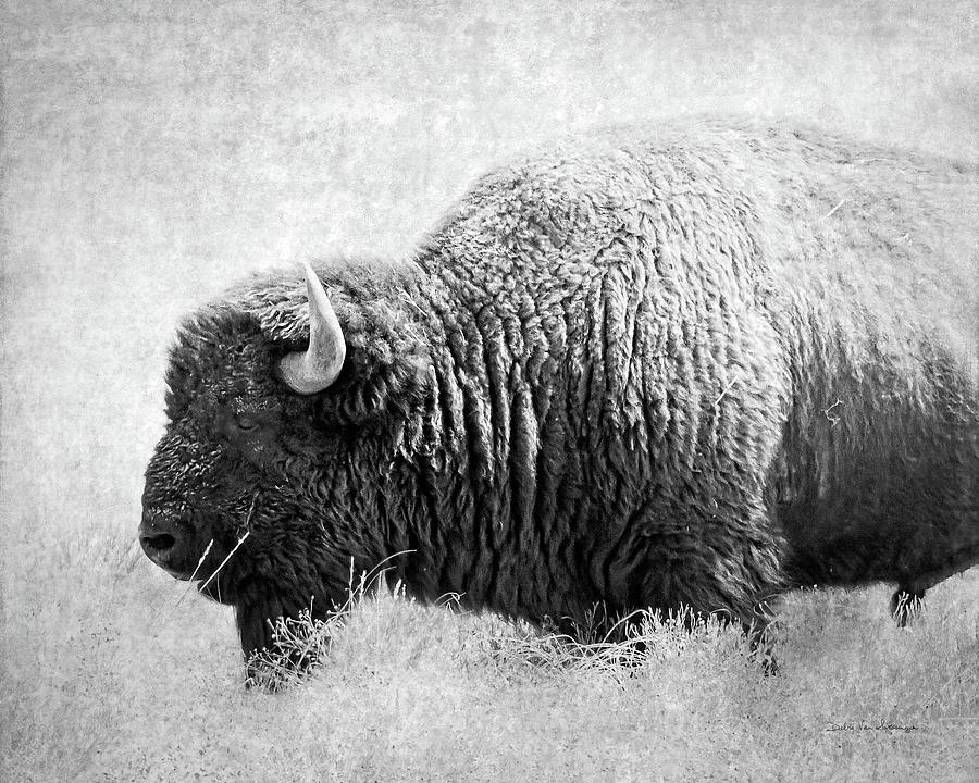 Animals Painting - Buffalo II Bw by Debra Van Swearingen