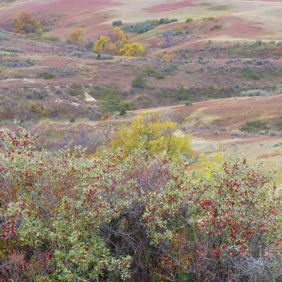 North Dakota Photograph - Buffaloberry Prairie by Cris Fulton