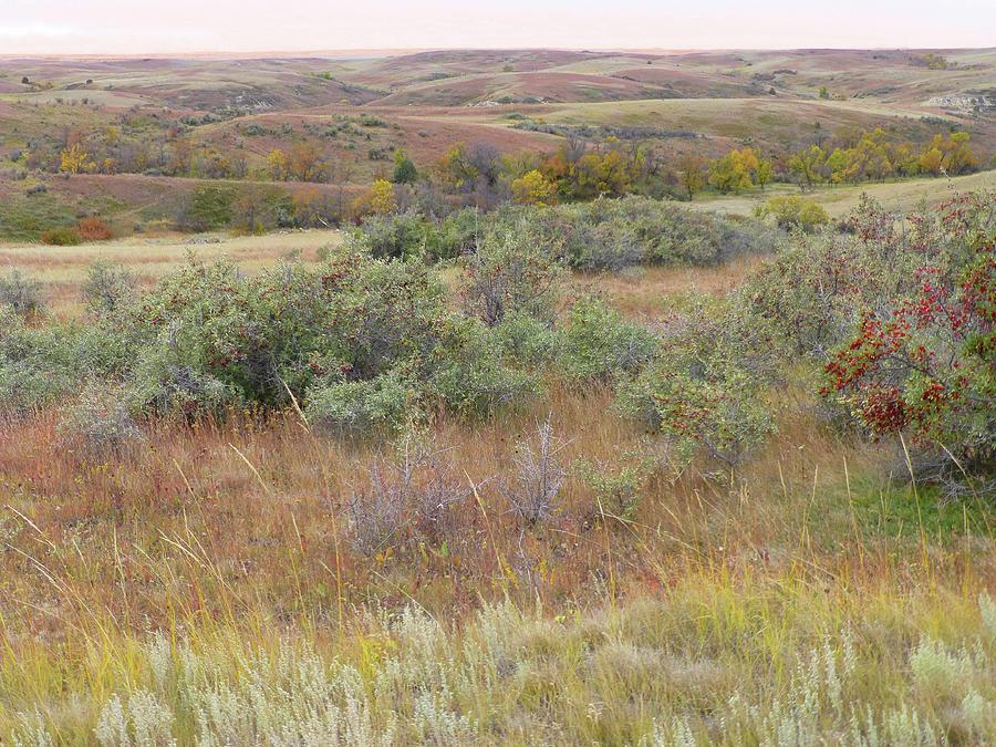 North Dakota Photograph - Buffaloberry September Reverie by Cris Fulton